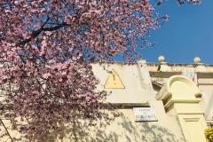 Avançament de primavera al carrer Encarnació.