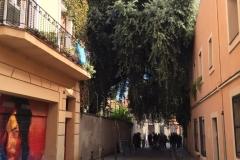 L'alzina vista des de la banda nord del carrer Manrique de Lara.