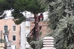 Tala dels arbres el dia 8 de novembre, que va donar el toc d'alarma.